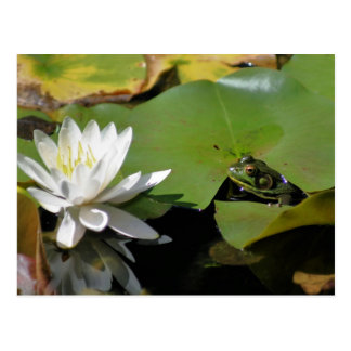 Frog And Water Lily Flower Nature Postcard