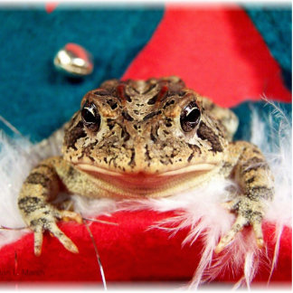 Frog Christmas , Tinsel, feathers, santa pattern Photo Sculpture Badge