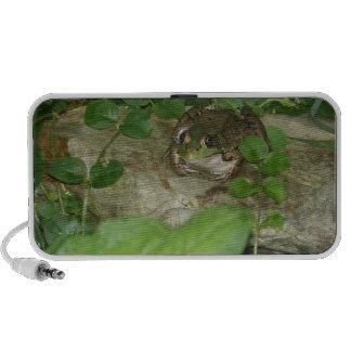 Frog doodle speakers