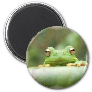 Frog Eyes Magnet
