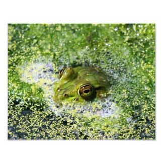 Frog Eyes Photo Art
