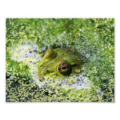 Frog Eyes Photographic Print