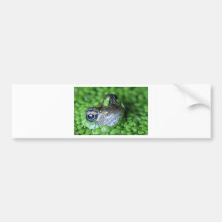 Frog face bumper stickers