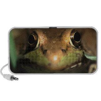 frog face travelling speaker