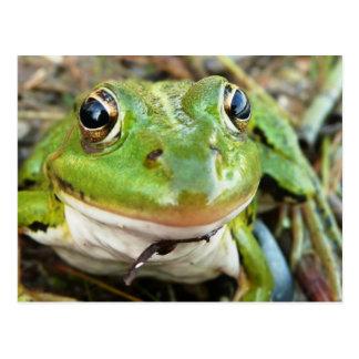 Frog Images Postcard