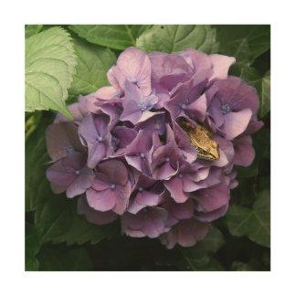 Frog in a Hydrangea, Wood Photo Print. Wood Print