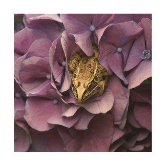 Frog in a Hydrangea, Wood Photo Print. Wood Wall Art