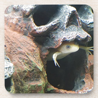 Frog in a Skull Coaster
