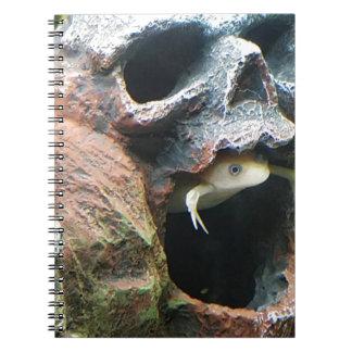 Frog in a Skull Notebooks