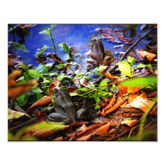 Frog in the Fall Photo Print