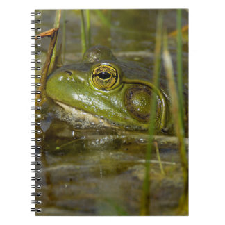 Frog in the Water Notebook