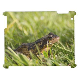 Frog iPad Covers