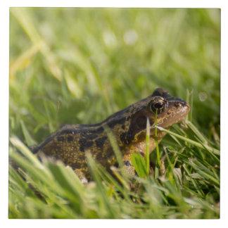 Frog Large Square Tile