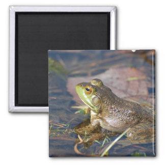 Frog Magnet Refrigerator Magnets