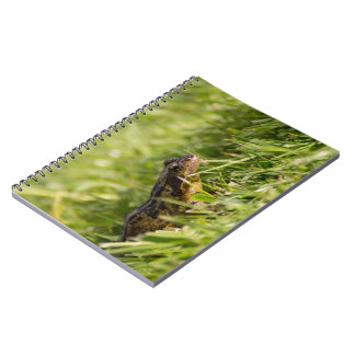 Frog Note Book