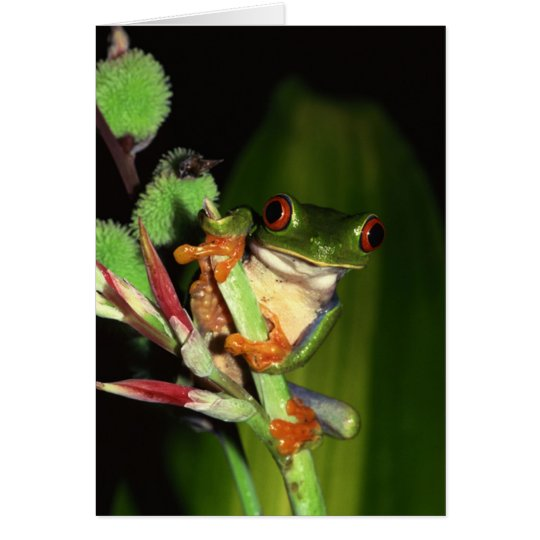 Frog notecards card