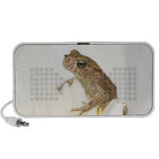 Frog on a Flower Doodle Speaker