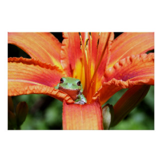 Frog on a Flower Poster