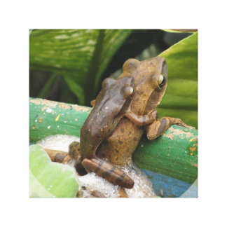 Frog On Back Canvas Print