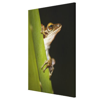 Frog on leaf in profile stretched canvas print