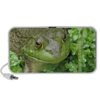 Frog on Marsh Speakers