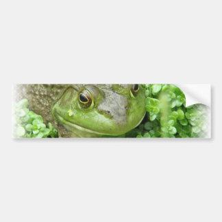Frog on Marsh Sticker Bumper Sticker