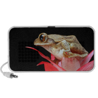 Frog on red flower beautiful photo doodle speakers