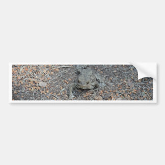 Frog On The Forest Floor Bumper Sticker