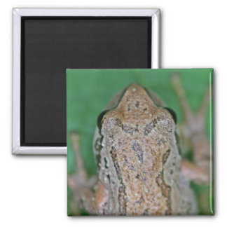 Frog Photo Magnets