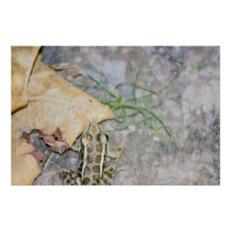 Frog Photo Poster