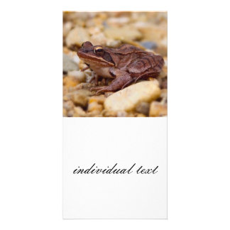 Frog Personalized Photo Card