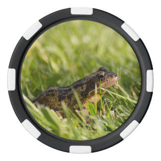 Frog Poker Chip Set