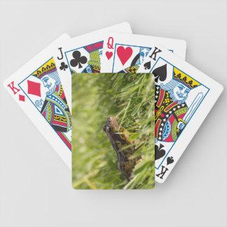 Frog Poker Deck