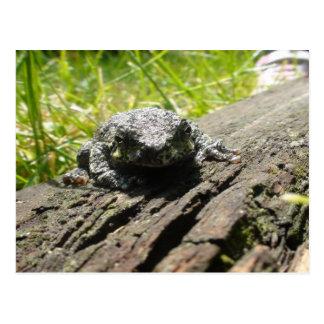 Frog Postcard