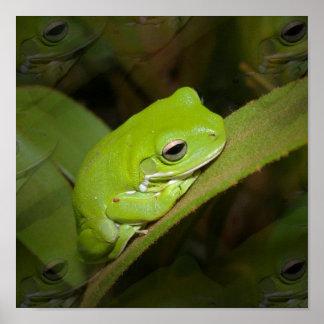 Frog Reflections Print