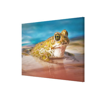 Frog resting by the pool canvas print