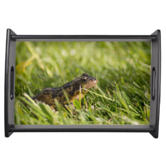 Frog Serving Tray