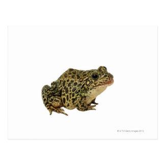 Frog shadow postcard
