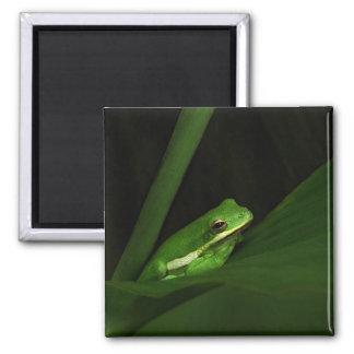 Frog Square Magnet