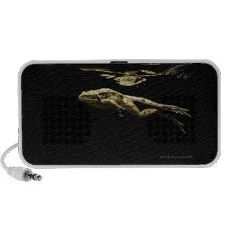 frog swimming in the dark just below the surface laptop speaker