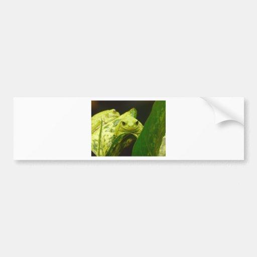 frog,tree frog bumper sticker