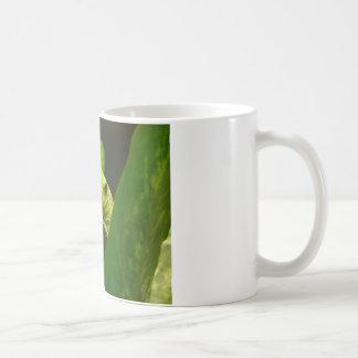 frog,tree frog mugs