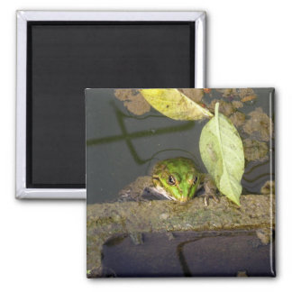 Frog Watching, magnet