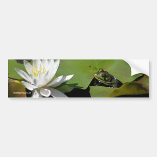 Frog Water Lily Flower Photo Bumper Sticker