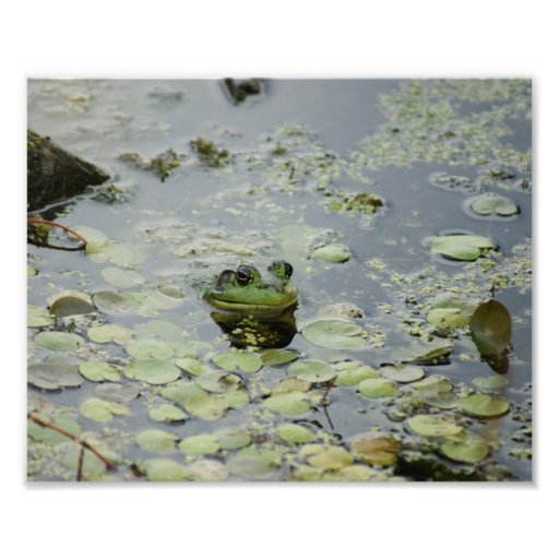 Froggie Smile 10 x 8 Photographic Print