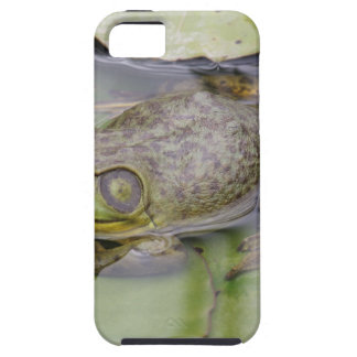 Froggy iPhone 5 Case