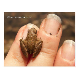 Froggy Hand Postcard