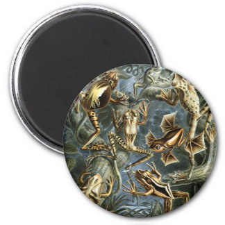 Frogs 6 Cm Round Magnet