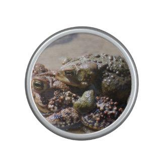 Frogs Speaker