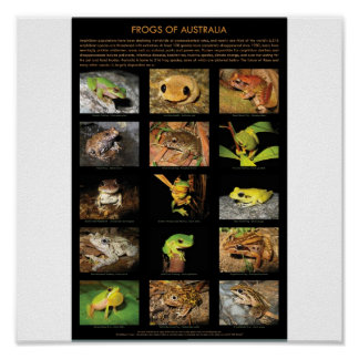 Frogs of Australia Poster